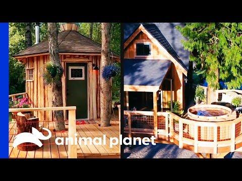 Super Chill Sauna vs. Hot Tub Rumpus Room! | Treehouse Masters