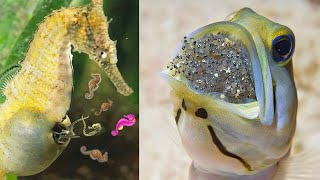 Amazing Ways of Giving Birth to Babies in the Animal Kingdom