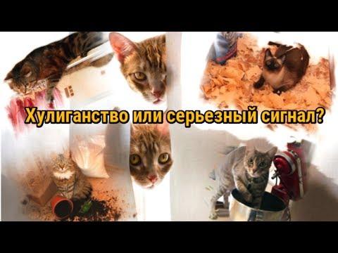 Вопрос: Кошка любит полизать пакеты Почему Что ее привлекает?