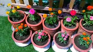 Summer flower ll summer Garden ll how to grow n care summer flowers🌸🌼🌿