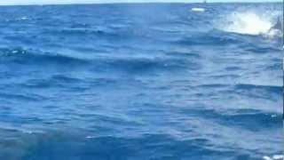 ガラパゴス諸島ゴードンロックにシャチ?!Galapagos Islands, Gordon Rocks