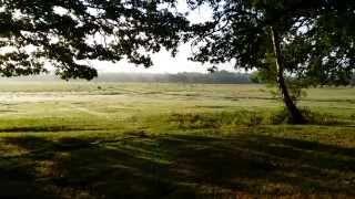 Microadventure - Brockenhurst, New Forest