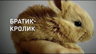 Братец-кролик