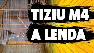 TIZIU M4 O MELHOR TIZIU JÁ VISTO NO YOUTUBE