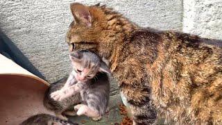 Madre gata con sus gatitos llorando a casa