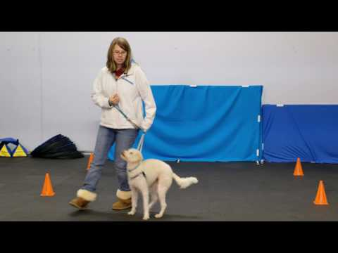 Dog Training Heeling Games