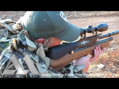 Airgun Hunting: Guinea Fowl Shooting in South Africa