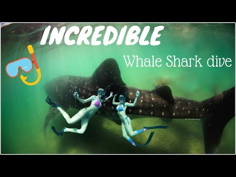 INCREDIBLE Dive with Whale Sharks!