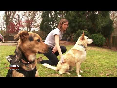 Allergic to your pet? These tips might help