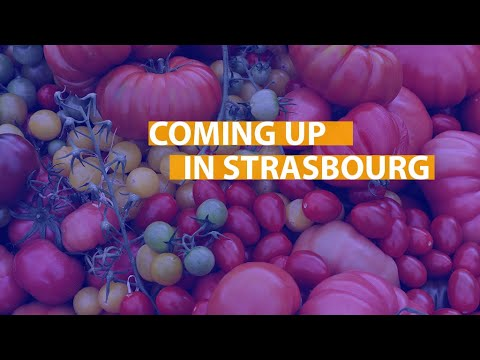 From waste packaging to organic food: coming up in Strasbourg