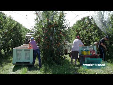 Réalisation Films Vidéo Agriculture arboriculture Récolte fruits pommes verger
