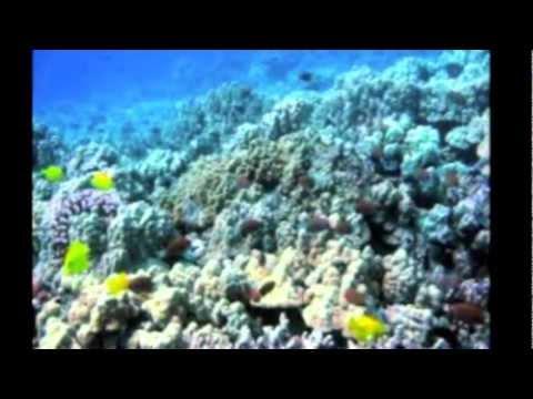 All Inclusive Hawaii Vacations - Kauai Island Adventure!