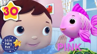 Color Fish Song   +30 Minutes of Nursery Rhymes   Learn With LBB   #howto