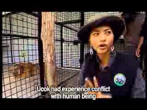 Jejak Putri di Tanah Tambling (Miss Indonesia & Miss Environment Visit)