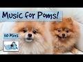 Perfect Pom Canine Adorable Dog Option
