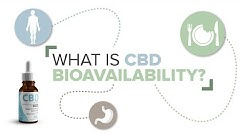 What is CBD Bioavailability?
