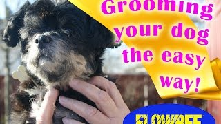 Grooming your dog at home - With Flowbee