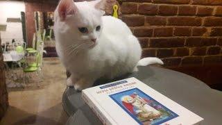 Обзор книги Юлии Юсуповой  игры белых кошек: мурчит или не мурчит?)