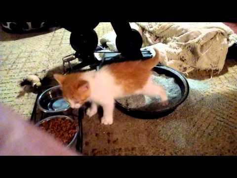 Litter Kwitter Cat Poops On Floor