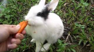 Rabbit Eating Carrots. Funny