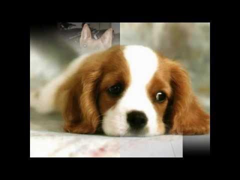 Một số hình ảnh về con chó