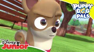 🤝 Making Friends!   Puppy Dog Pals   Disney Junior UK