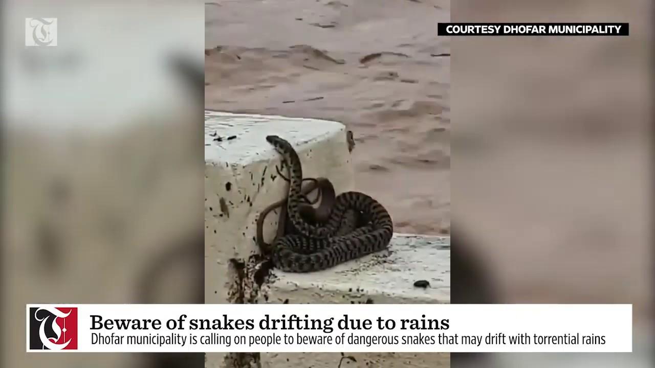 Beware of snakes drifting due to rains: Dhofar Municipality