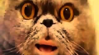 Поющий кот Сальвадор Hardstyle Remix(, 2014-04-11T17:48:08.000Z)