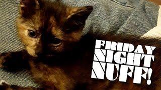 KITTY CLICK-BAIT Q&A! LOOKIT THE KITTY!!!!!!  (12/14/18)│ Friday Night Nuff!