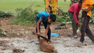 Dog Cute Dogs and Babies are Best bangla || Dogs Video dogs funny video Bangla || কুকুর হয়তে সাবধান