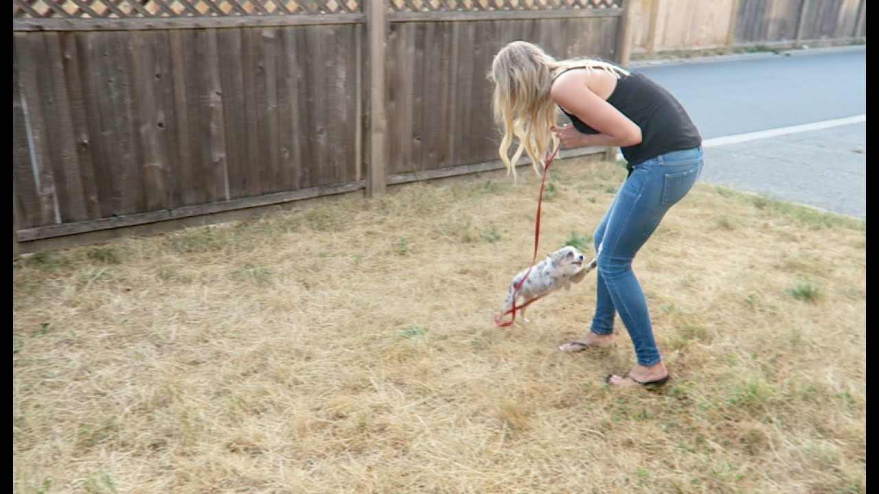 How Make Dog Area Your Backyard