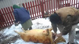 18 + Резьба и разделка свиньи в с  Сторожевом 18г