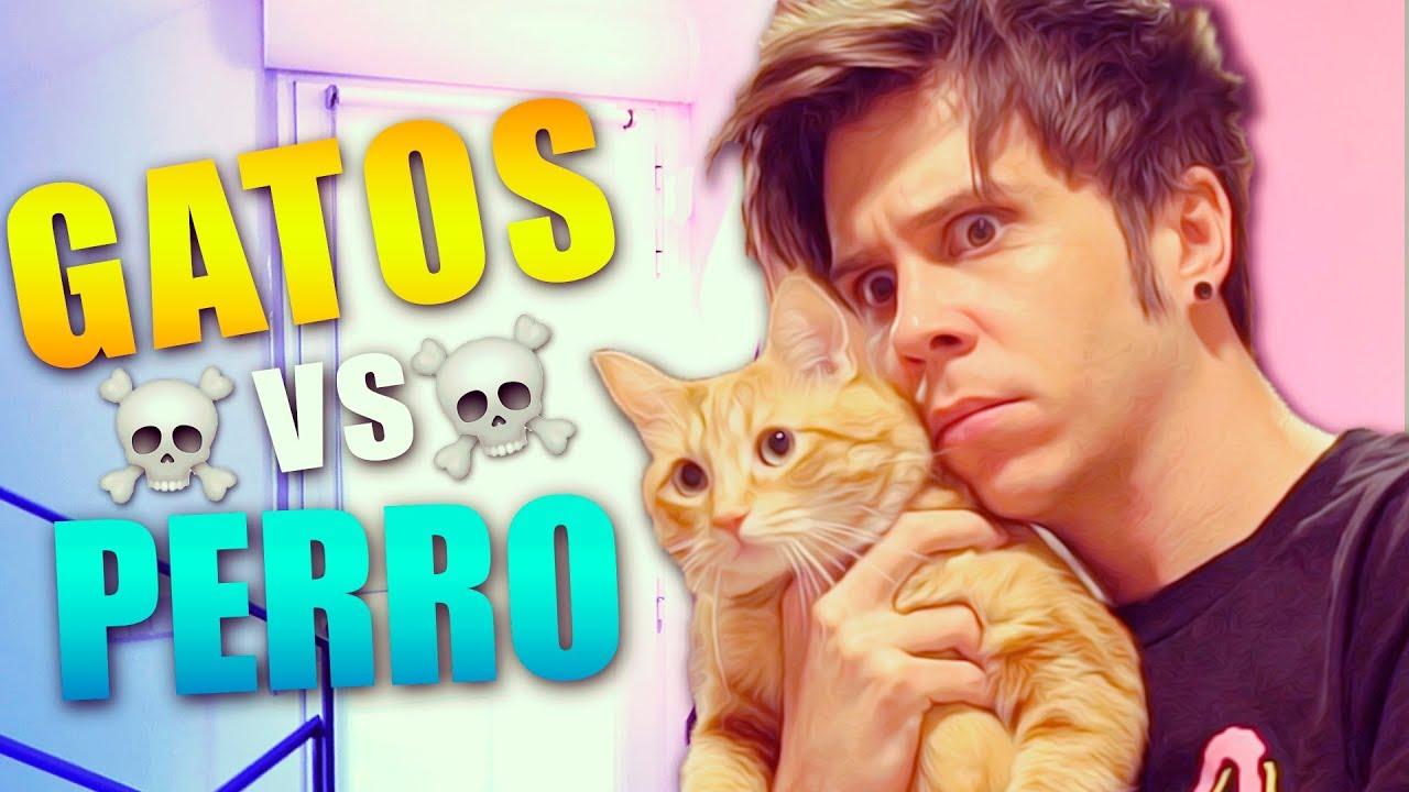 Mis Gatos Conocen A Un Perro Youtube