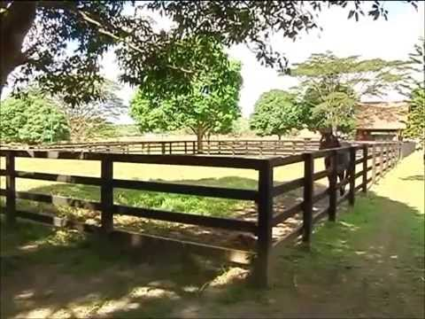 TAKE a TOUR of COOL SUMMER FARM - raw footages.wmv ( Part 1 )