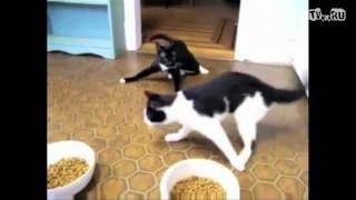 Кошки под валерьянкой.avi