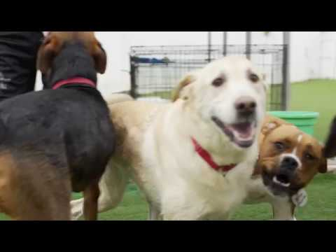 Best Friends FurEver Video