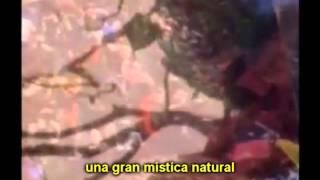 Bob Marley   Natural Mystic (Subtitulado en Español).wmv