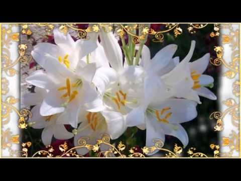 AVE MARIA - Sister Choir Gregorian Chant - Benedectine Nuns