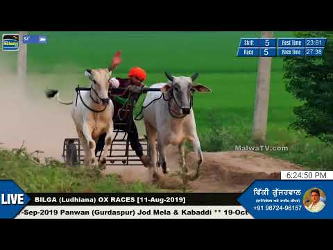 SHIFT 5 🔴 BILGA (Ludhiana) 🔴 OX RACES - ਬਲਦਾਂ ਦੀਆਂ ਦੌੜਾਂ [11th-Aug-2019]