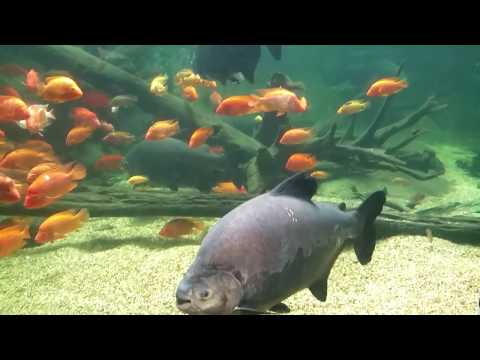 Sealife Aquarium, Mooloolabah, Sunshine Coast.