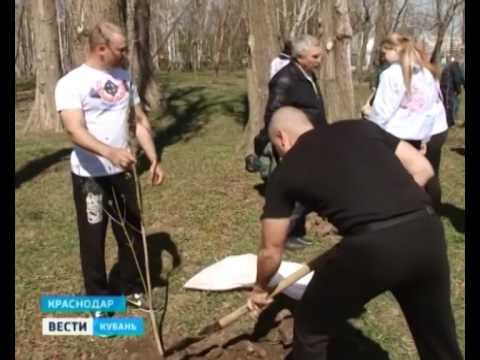 На основе хвойных деревьев сформируют городской ландшафт Краснодара