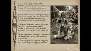 Игорь Мазунин Уродливый кот
