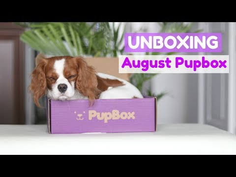 UNBOXING AUGUST PUPBOX with Herky the Cavalier & Puppy Milton | Cavalier King Charles Spaniel