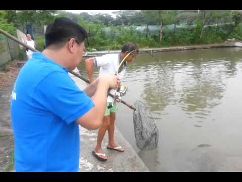 CP gao tun catch