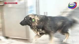 В Махачкале выявлено более 7 тыс.бездомных собак