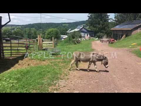 WWOOF-USA APPLE POND FARM