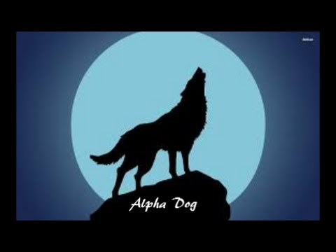 Alpha Dog~ Fall Out Boy Lyrics