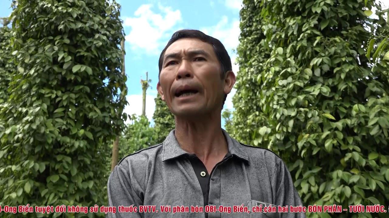 Bí quyết để Hồ tiêu Việt Nam đứng vững trên thị trường Quốc tế