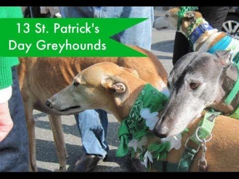 Greyhound dog train and information