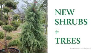 New Specialty Trees + Shrubs